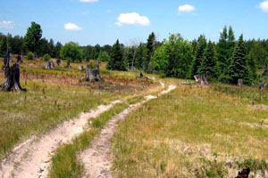 ATV and ORV trails